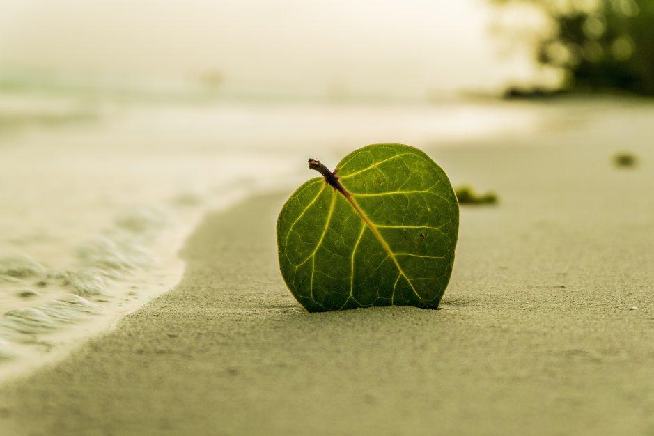beach-coast-leaf-39573