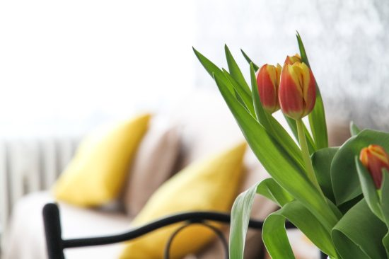 beautiful-bloom-blooming-358536